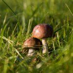 Что взять с собой в поход за грибами?