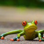 Делайте упражнение «Лягушка» и у вас будут крепкие ноги и ягодицы