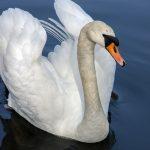 5 советов для красоты вашей шеи
