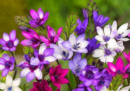 10 многолетних цветущих растений для дома