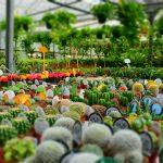 Какие растения можно держать дома лентяям?