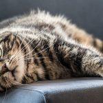 Фелинотерапия. Кошка вместо лекарств