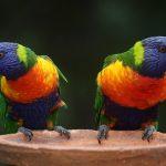 Лечение цветом — цветотерапия