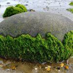 Водоросли: здоровье с морского дна