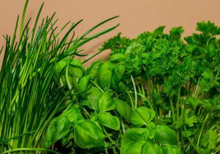 Улучшаем вкусовые ощущения пряными травами
