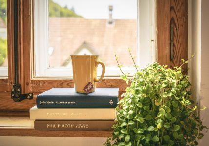 10 лучших мест для комнатных растений