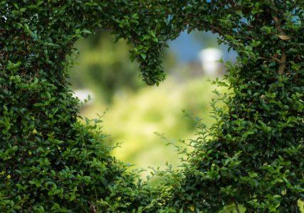 Поддерживаем своё сердце — наш пламенный мотор