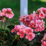 Домашние растения для привлечения денег